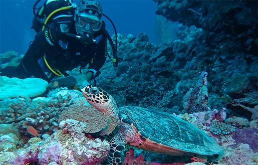Hawkesbill Turtle - Muiron Islands