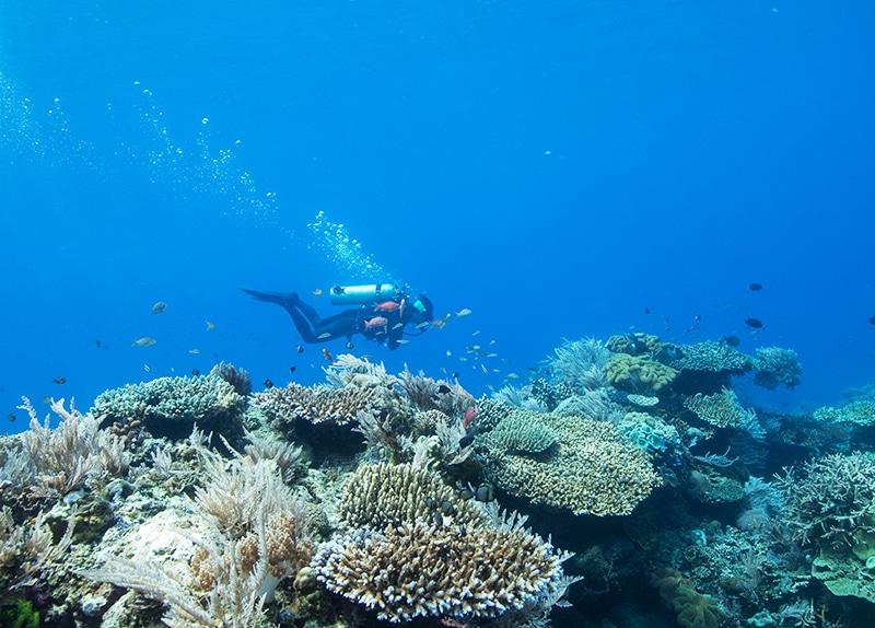 Dive Ningaloo - Muiron Islands