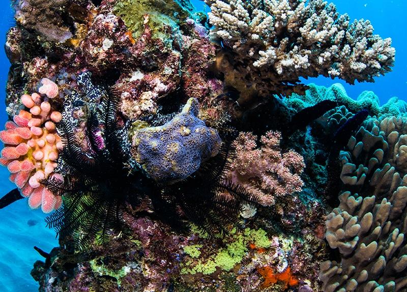 Dive Ningaloo - Muiron Snorkel