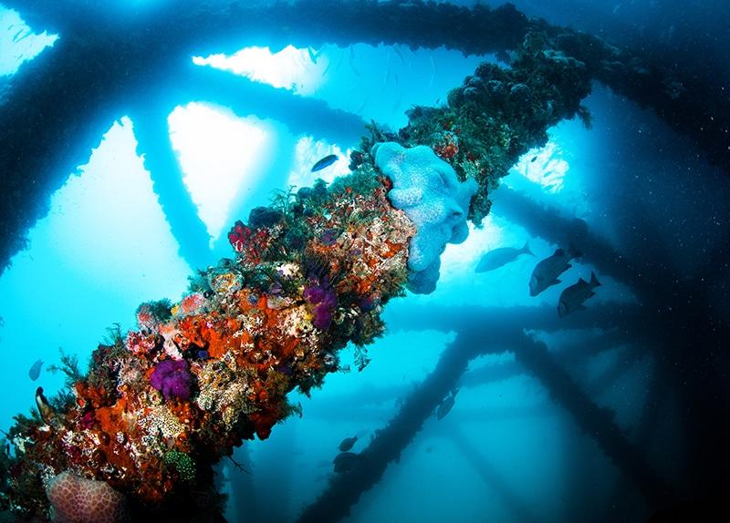 Dive Ningaloo - Exmouth Navy Pier