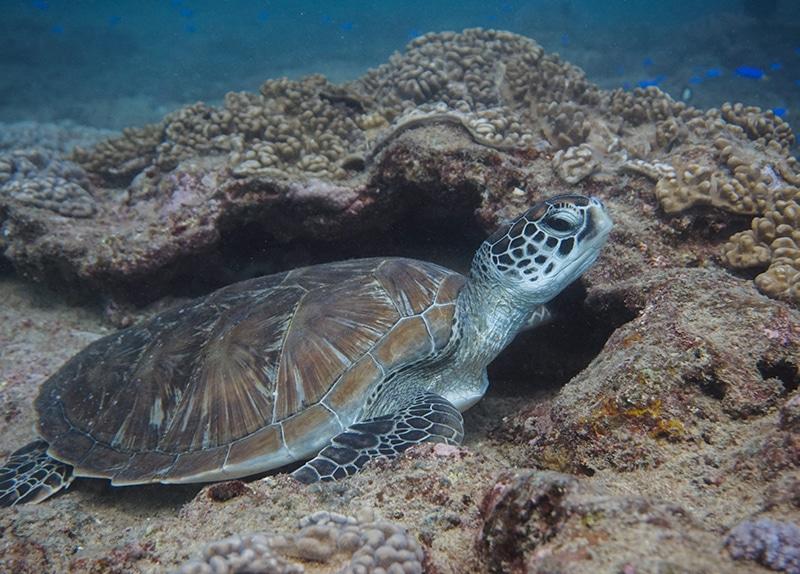 Dive Ningaloo - Reef
