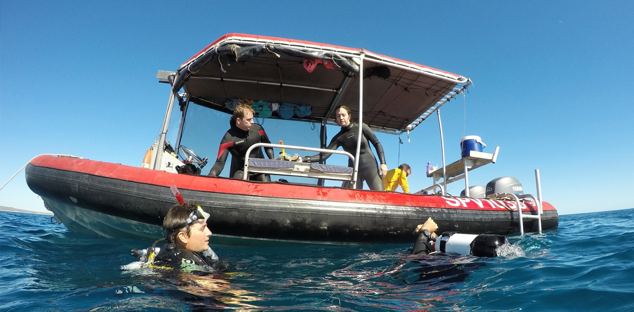 Dive Ningaloo - Sacred Spirit Rib