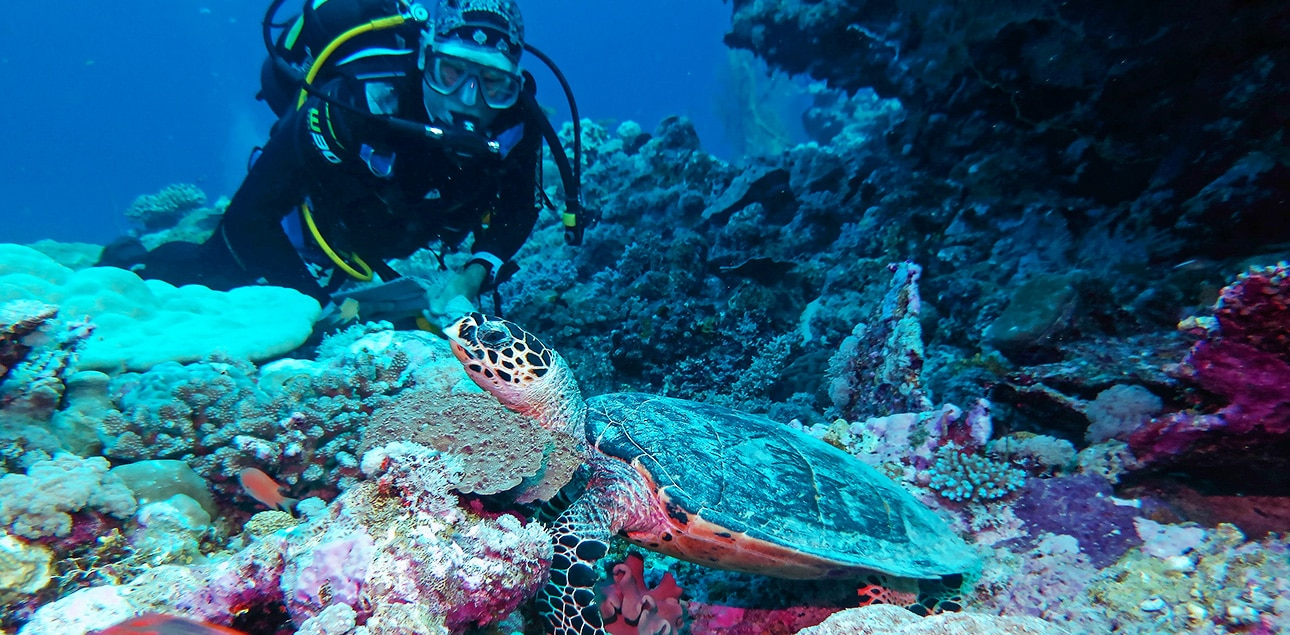 Dive Ningaloo - Muiron Islands - Hawkesbill Turtle