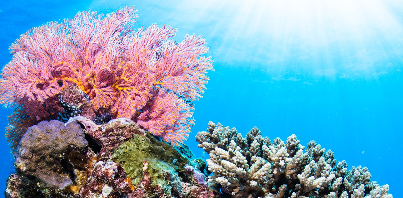Soft corals at Muiron Islands - Colour!