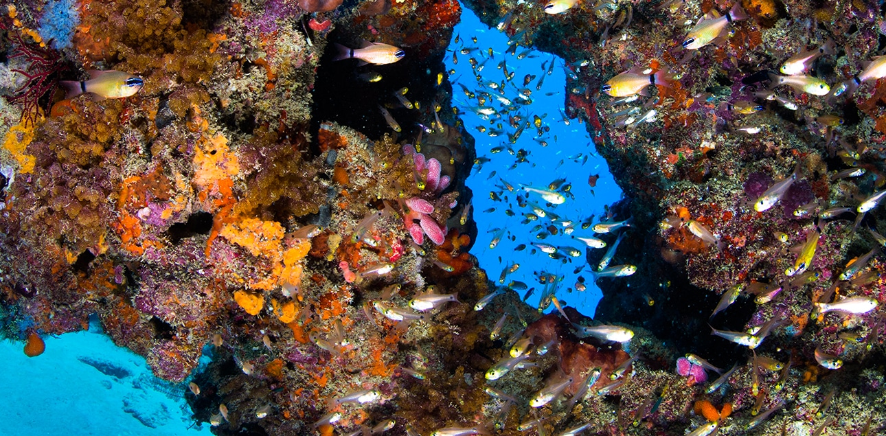 Dive Ningaloo - Glass fish at Muiron Islands
