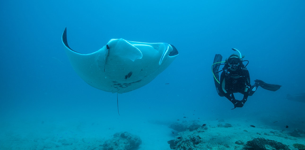 Dive Ningaloo - Oceanic Manta - Lighthouse Bay